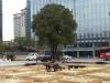 광화문 옛 도청사에 남겨진 측백나무, 반세기만에 경기도와 재회