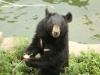 서울대공원, 개천절에는 단군신화의 주인공 곰을 만나러 가볼까
